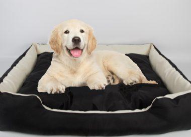 Cama impermeable XXL para mascotas